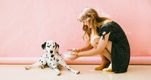 5 Pet Care Tips For Busy Owners