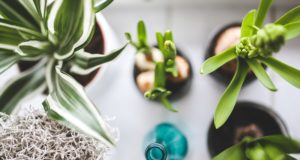 A Guide To Successfully Growing Houseplants